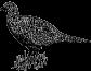 Engraved Hen Pheasant 417