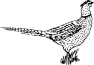 Engraved Pheasant 389