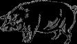 Engraved Pig 413